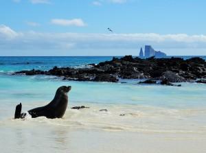 Sonnenbaden am Strand von Cerro Brujo
