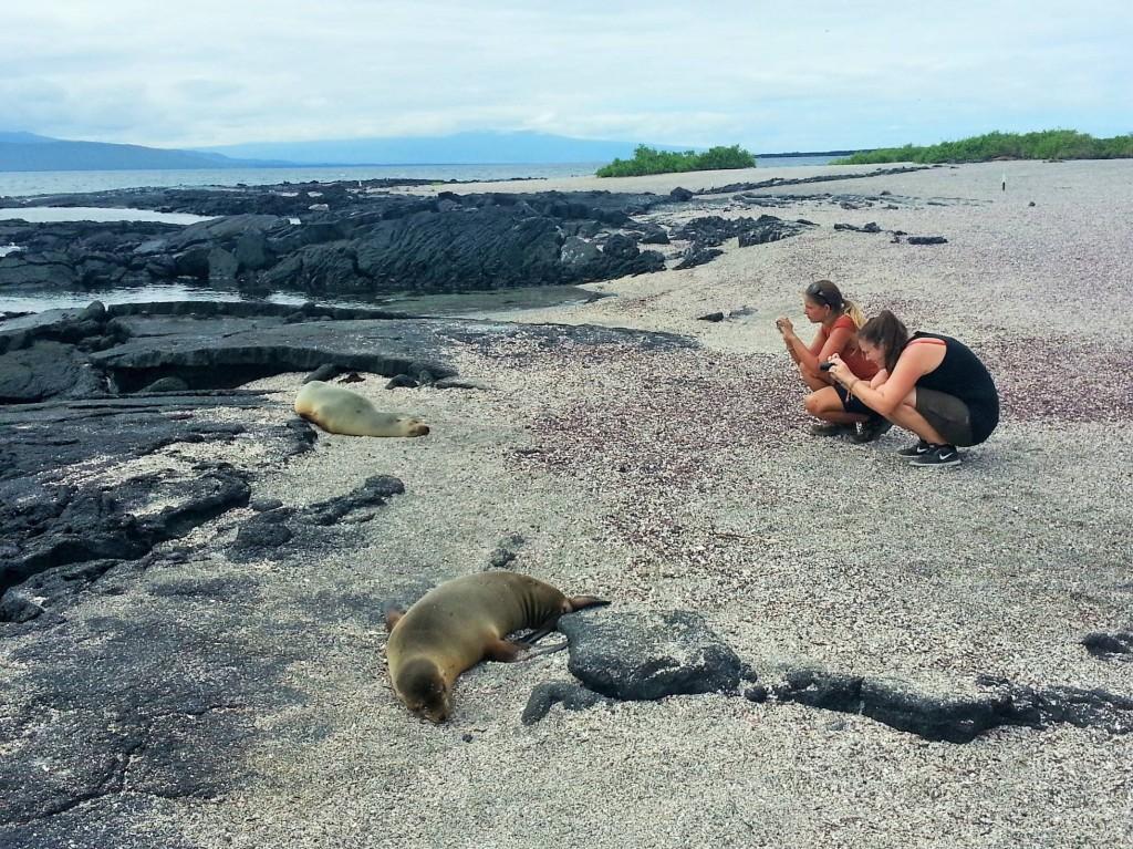 Voller Einsatz... So entstanden die schönen Galapagos Bilder