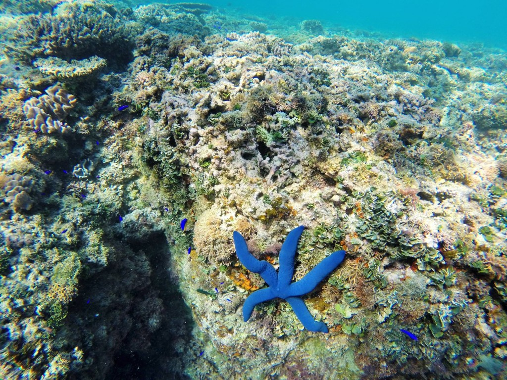 Auch hier mussten wir die Unterwasserwelt entdecken gehen