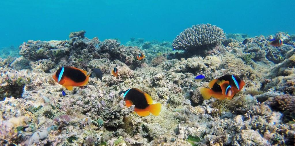 Nemo, Nemo und nochmals Nemo
