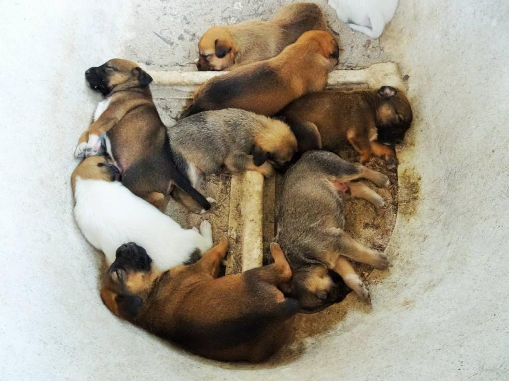 Süsse Hundewelpen im Beach House