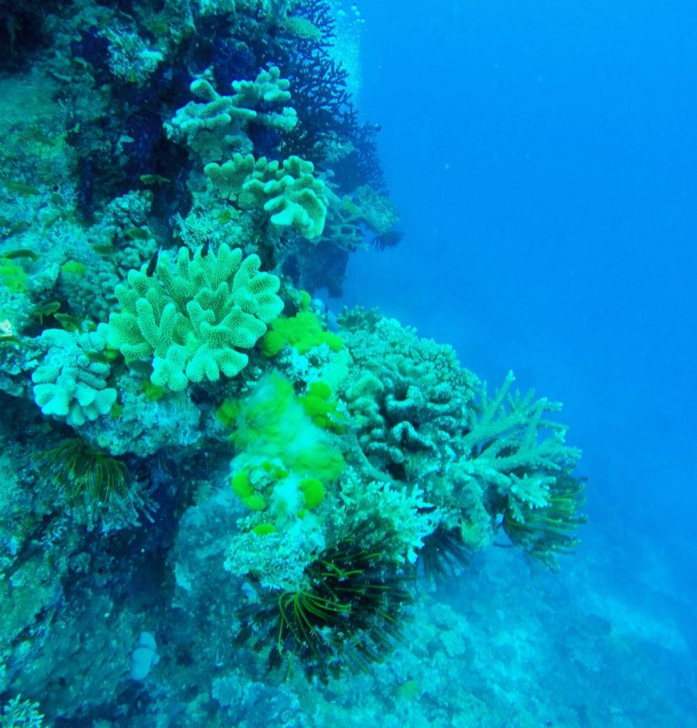 Wunderbare Unterwasserwelt Taveunis