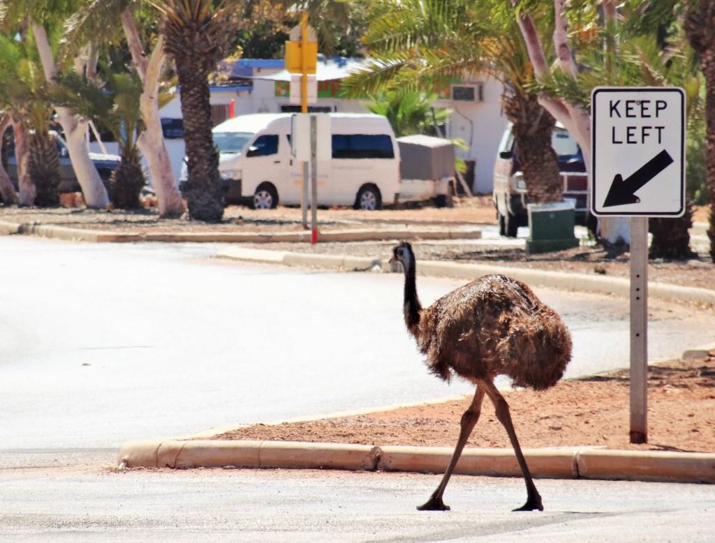 Hier hält sich jemand ganz genau an die Verkehrsregeln...