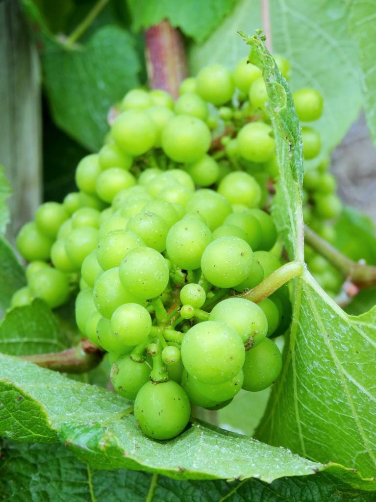 Margareth River Wineregion