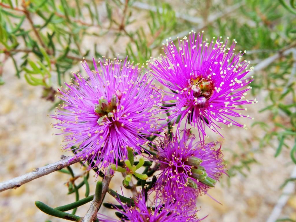 Schöne Blume 1