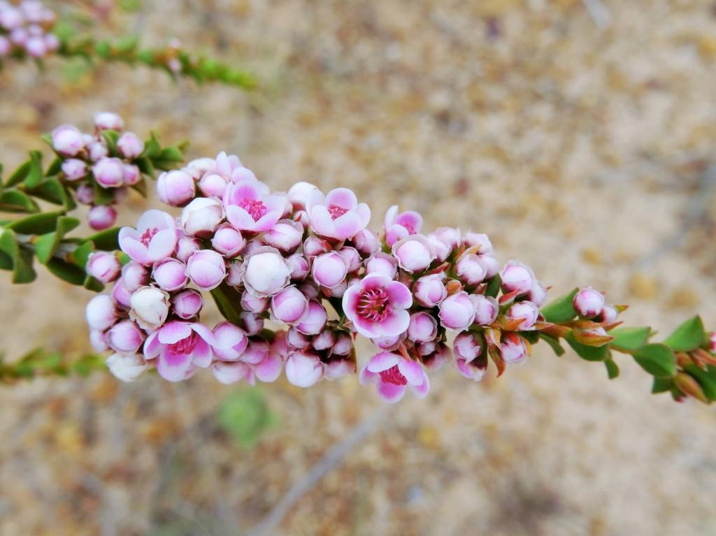 Schöne Blume 2