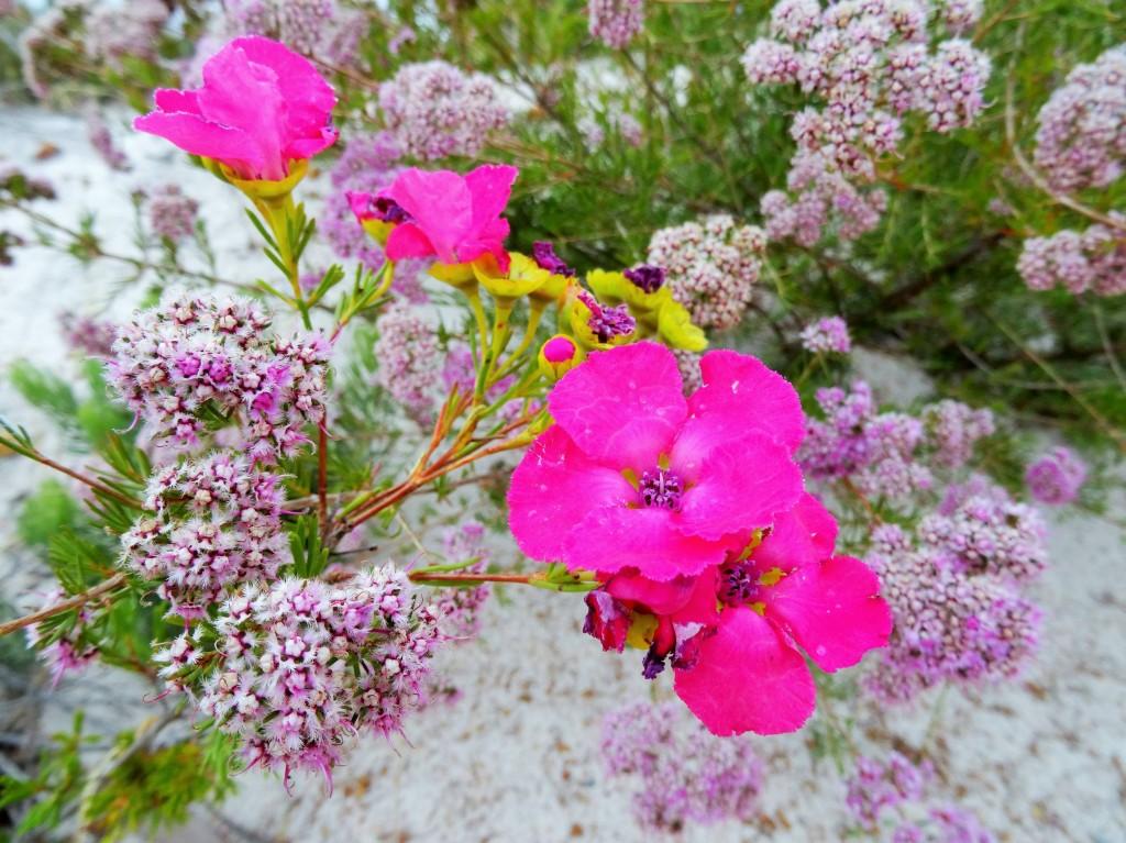 Schöne Blume 3