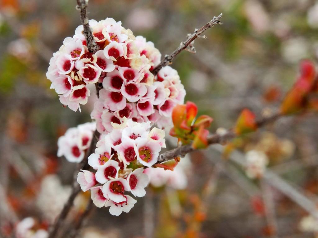 Schöne Blume 4