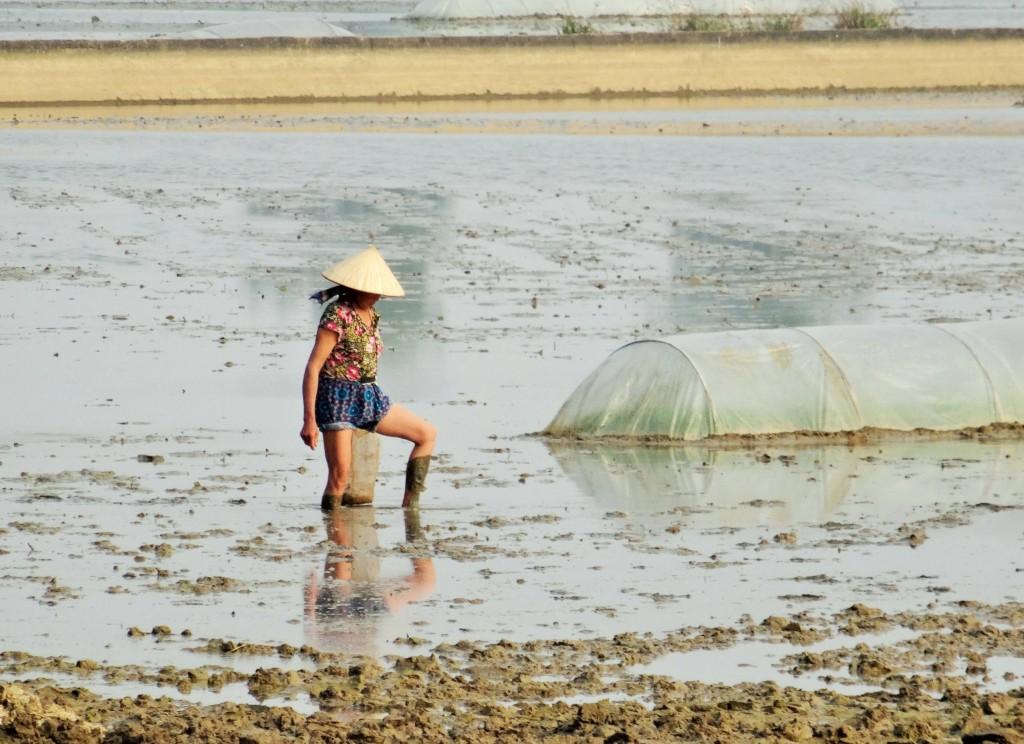 Der Reisanbau und Reisernte sind immernoch harte Handarbeit
