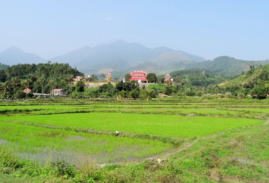 Für mehr als die Hälfte der Erdbevölkerung ist Reis das Hauptnahrungsmittel
