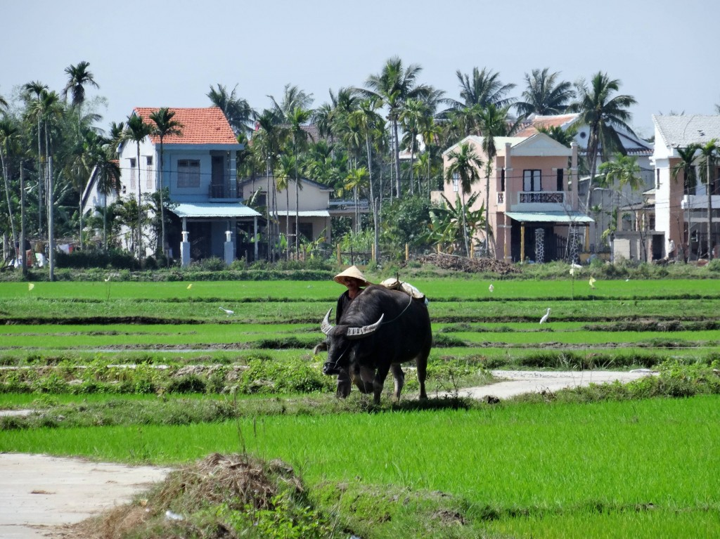 Reisfelder wohin das Auge reicht...