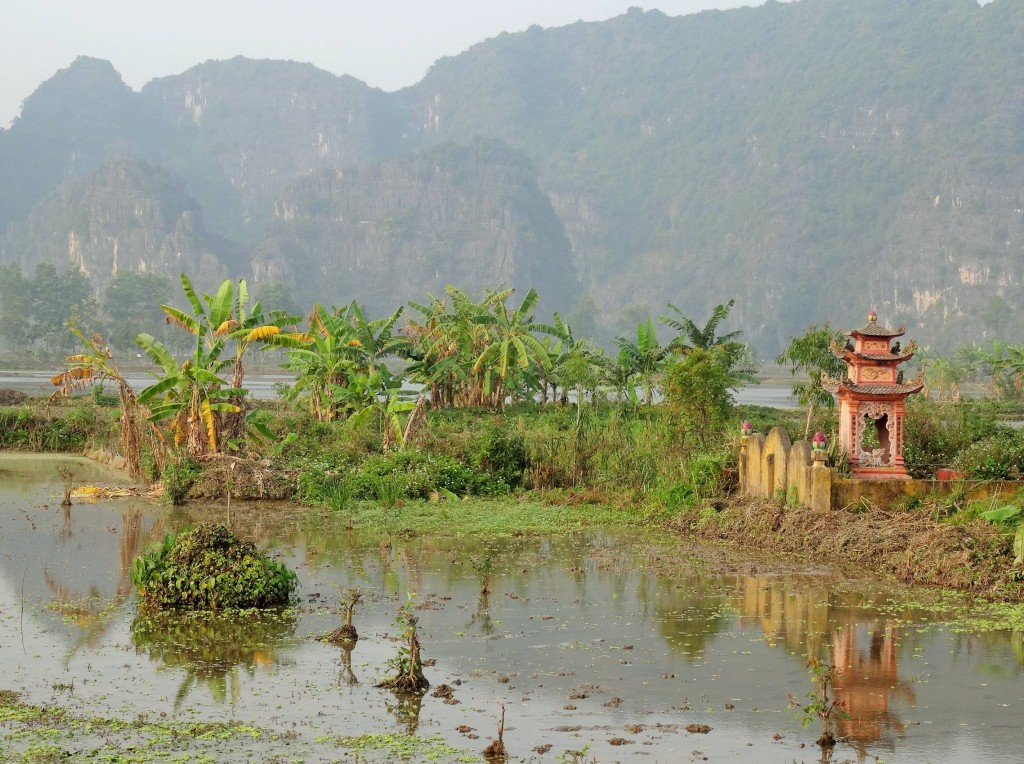 ... ehe sie mühevoll einzeln in die bewässerten und gepflügten Reisfelder umgesetzt werden