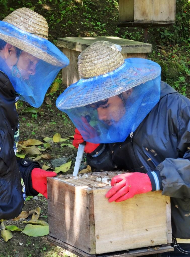 Auch Honig wird hier produziert