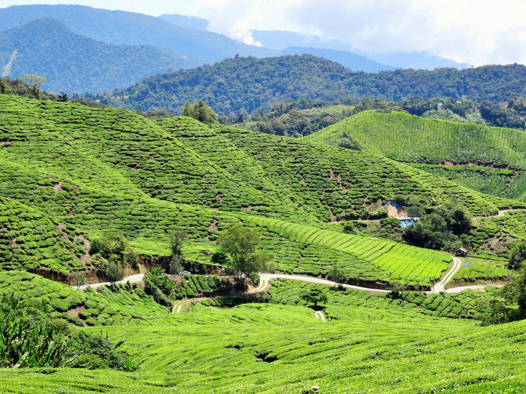 Welcome to the Cameron Highlands