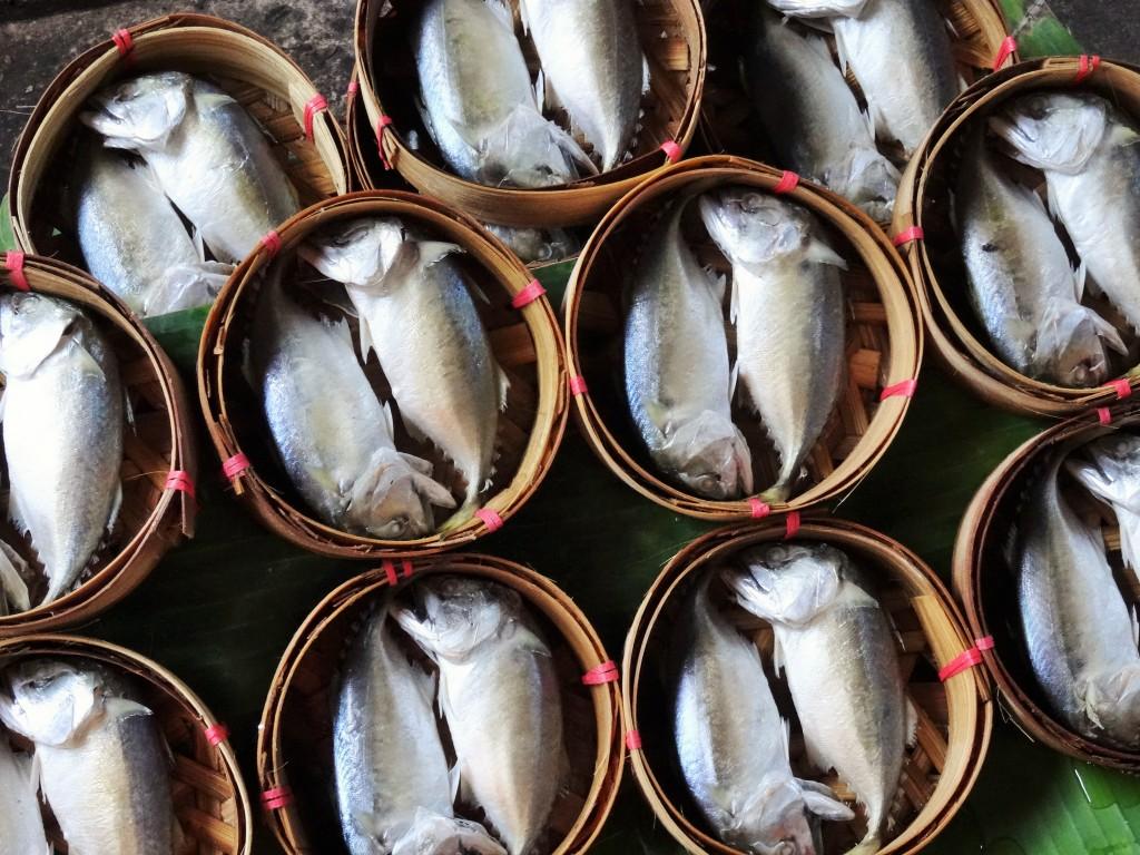 Wieder einmal frische Fische...