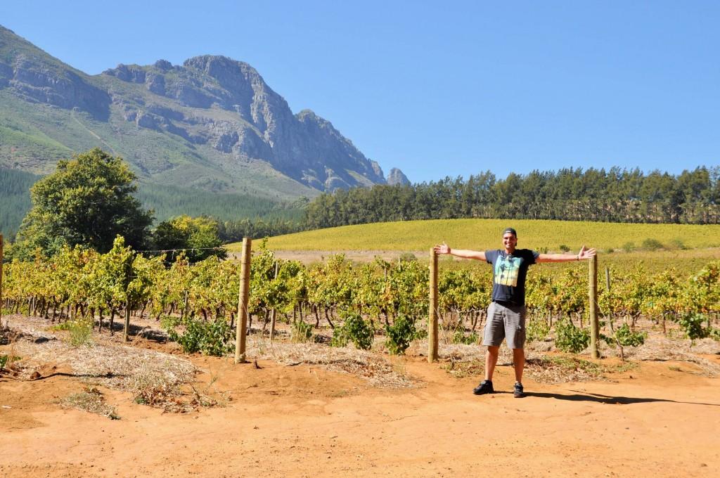 In Südafrika gibt es wunderbare Weinregionen