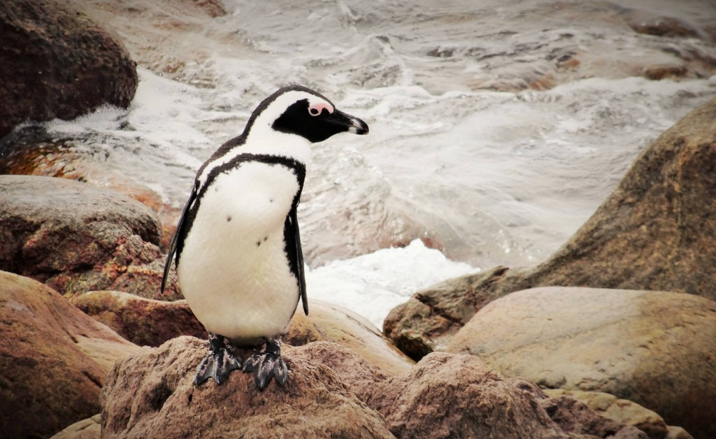 Pinguine sind am Bauch weiss, damit sie von Feinden im Wasser nicht erkannt werden. Von unten sieht ihr Bauch nämlich wie der helle Himmel aus...