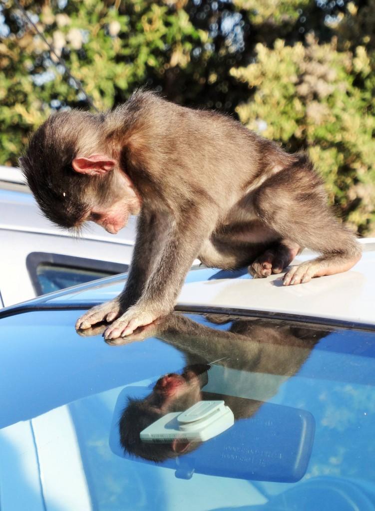 Was ist denn das für ein Affe...