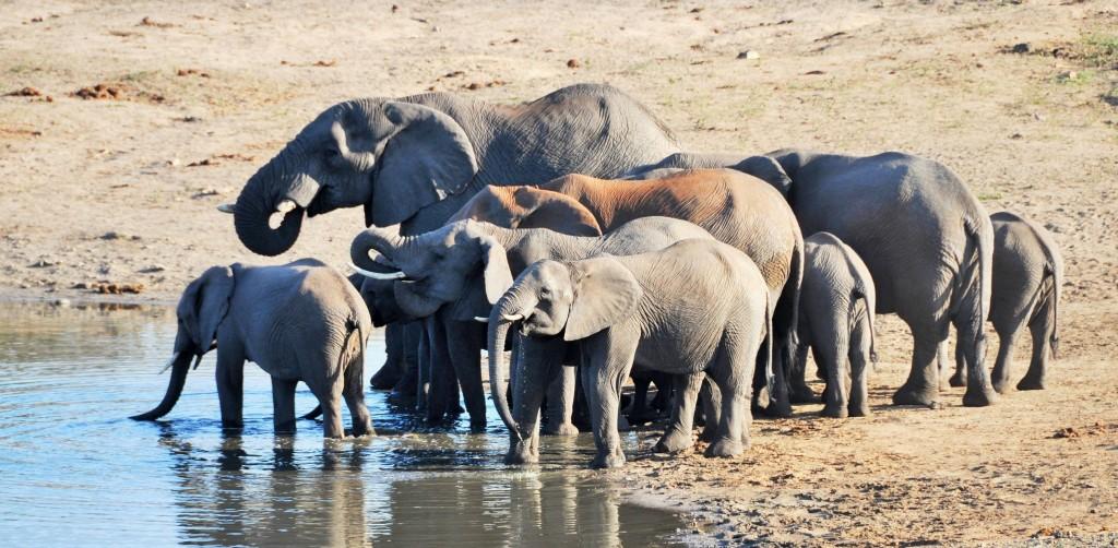 Besonders an Flussläufen und Wasserdämmen kann man Elefanten beobachten.