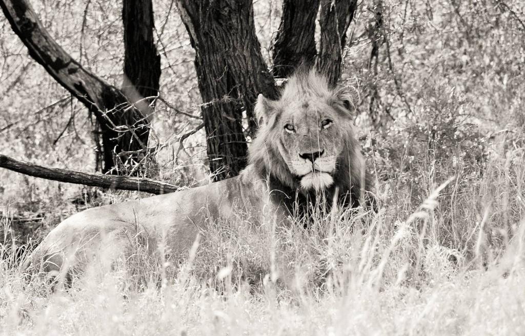 Der König höchstpersönlich