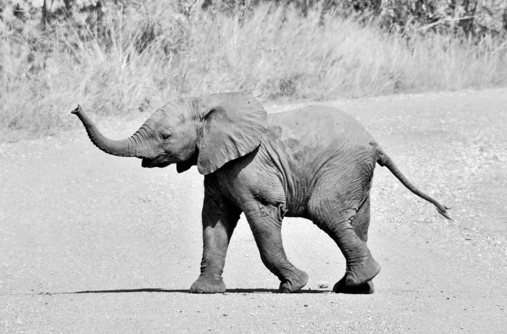 Hello Dumbo!