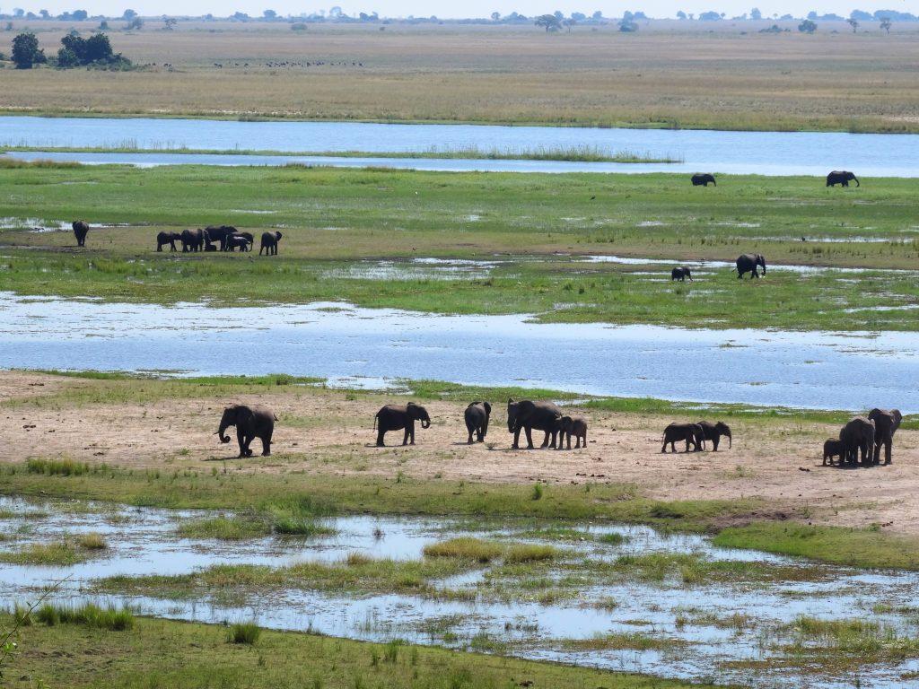 Blick auf den Chobe River