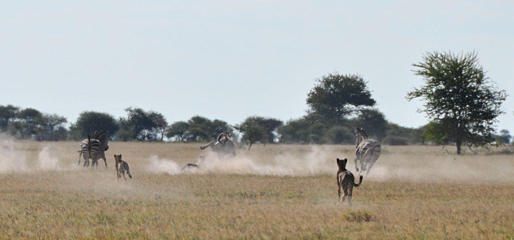 Und auf gehts! Mit 120 km:h hinter dem Zebra her